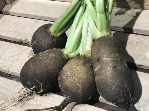 Rammenas - vergeten groenten