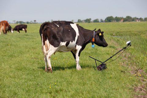 Oeps... Dat krijg je ervan als je gekke dingen met koeien doet.